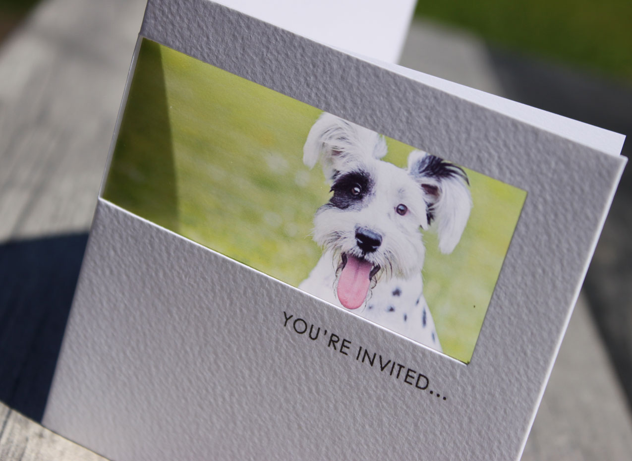 wedding invitation with dog photograph