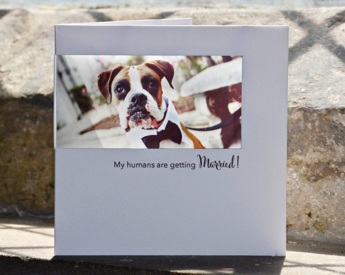 boxer dog invites